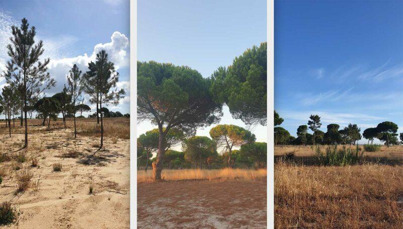 Photographer Lisbon Portugal Nature